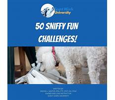 Dog training ebooks collection Plan