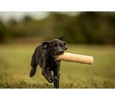 Dog training emporia ks Plan