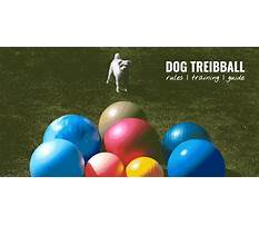 Dog training equipment list Plan