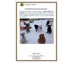 Dog training etobicoke ontario Plan