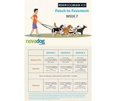 Dog training in czech Plan