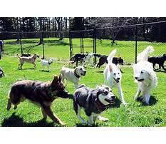 Dog training in minneapolis.aspx Plan