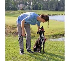 Dog training in pa.aspx Plan