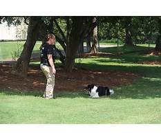 Dog training in south carolina.aspx Plan