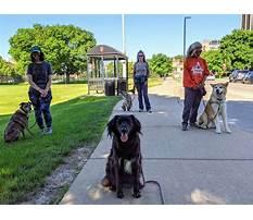 Dog training madiosn middleton wi.aspx Plan
