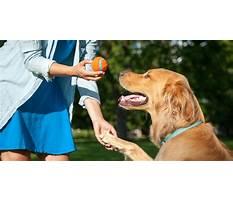 Dog training near effingham il Plan