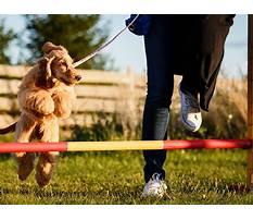 Dog training near olathe.aspx Plan