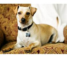 Dog training separation anxiety tips.aspx Plan