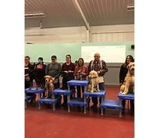 Dog training st joseph mo.aspx Plan