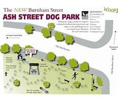 Dog training tigard oregon.aspx Plan