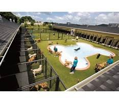 Dog training tullamarine.aspx Plan