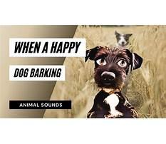 Dogs barking happy Plan