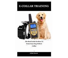 E collar dog training Plan