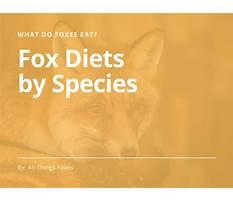 Emilia fox diet in the wild Plan