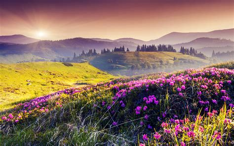 Flower Landscape Wallpaper