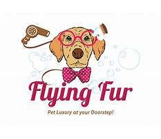 Flying fur dog training.aspx Plan