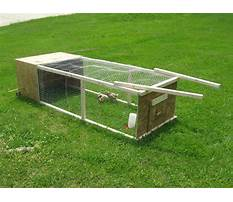 Free chicken tractor plans for meat chickens Plan