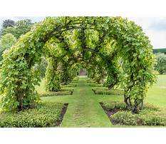 Garden climbers and vines Plan