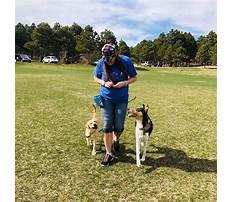 German shepherd dog training colorado springs.aspx Plan