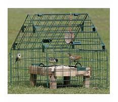 Ground bird feeder cage Plan
