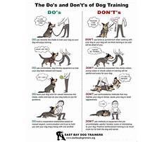 Group dog training exercises.aspx Plan