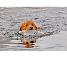 Gun dog training gifts Plan