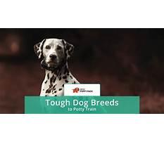 Hardest dog breed to potty train.aspx Plan