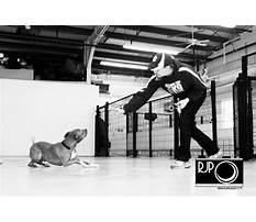 Hex dog training medway ma.aspx Plan