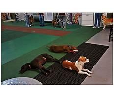 Houston dog training club.aspx Plan