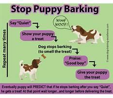 How do i train my dog not to bark.aspx Plan