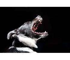 How do you make a dog stop barking.aspx Plan