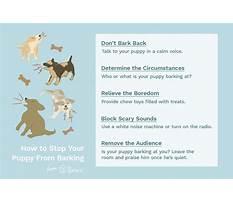 How do you train a barking dog Plan