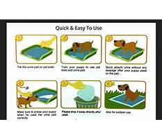 How do you train a dog to use pee pads.aspx Plan