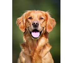 How much does it cost to train a guide dog Plan
