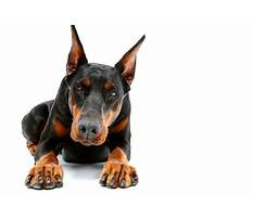 How much does protection dog training cost Plan