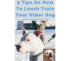 How to bite train a dog Plan