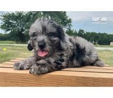 How to build an outdoor dog house.aspx Plan