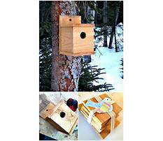 How to build bird houses videos Plan