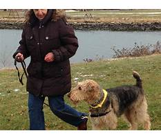 How to keep a dog from barking outside Plan