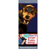 How to make a dog stop biting Plan