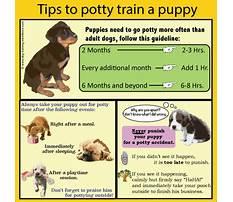 How to potty train my dog.aspx Plan