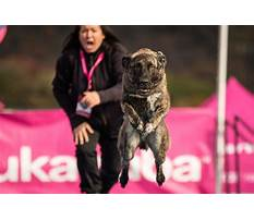How to prevent puppy biting Plan