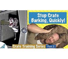 How to stop a barking dog at night Plan