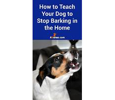 How to stop a dog barking for attention Plan