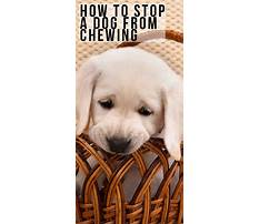 How to stop a dog chewing Plan