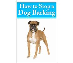 How to stop a dog from barking so much Plan