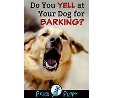 How to stop barking dog Plan