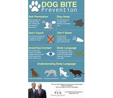 How to stop dog biting Plan