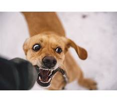 How to stop dog from play biting Plan