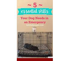 How to stop dogs barking at the door Plan